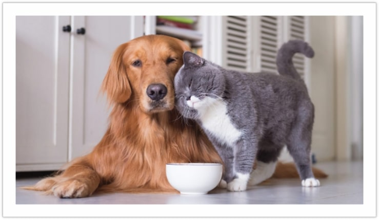 Being nice only for a reason - Dogs and Cats Living Together