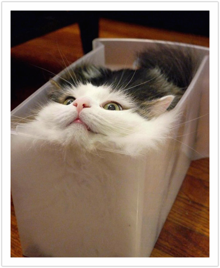 the cat in the box - funny pictures of cats on the go