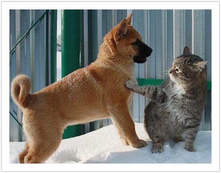 Feminism at it's best - Photo of Dog and Cat