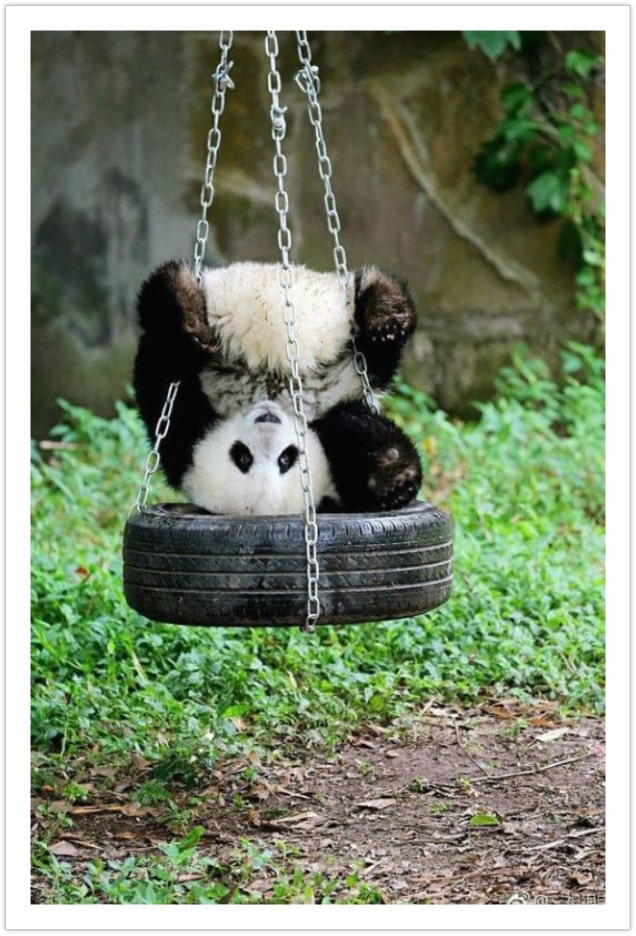 I was just curious - funny panda images