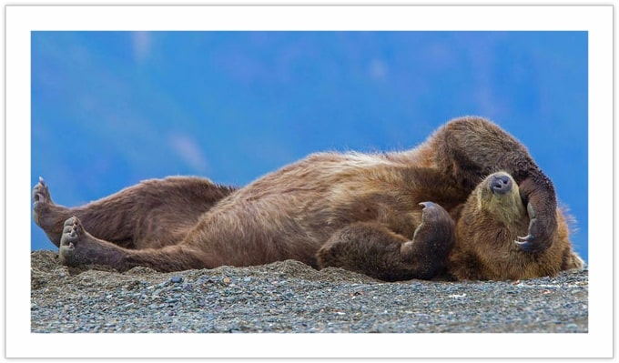 Monday mornings be like - bears in the wilderness