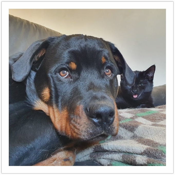 Photo-Bomb Cat - Dogs and Cats Living Together
