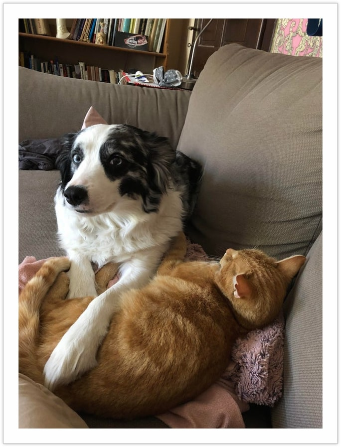 The Dog lost the bet - Photo of Dog and Cat