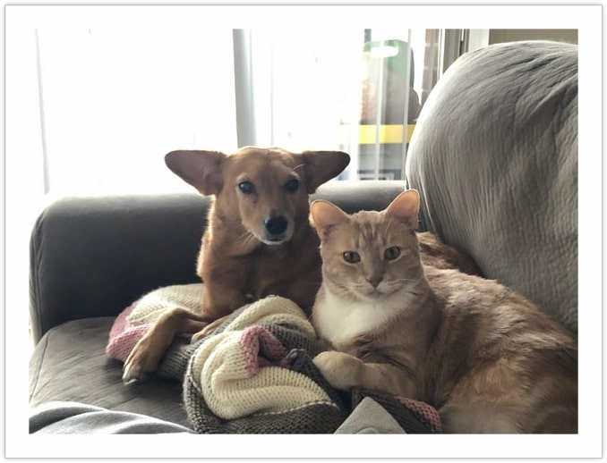 We do not tolerate human interference - Dog and Cat