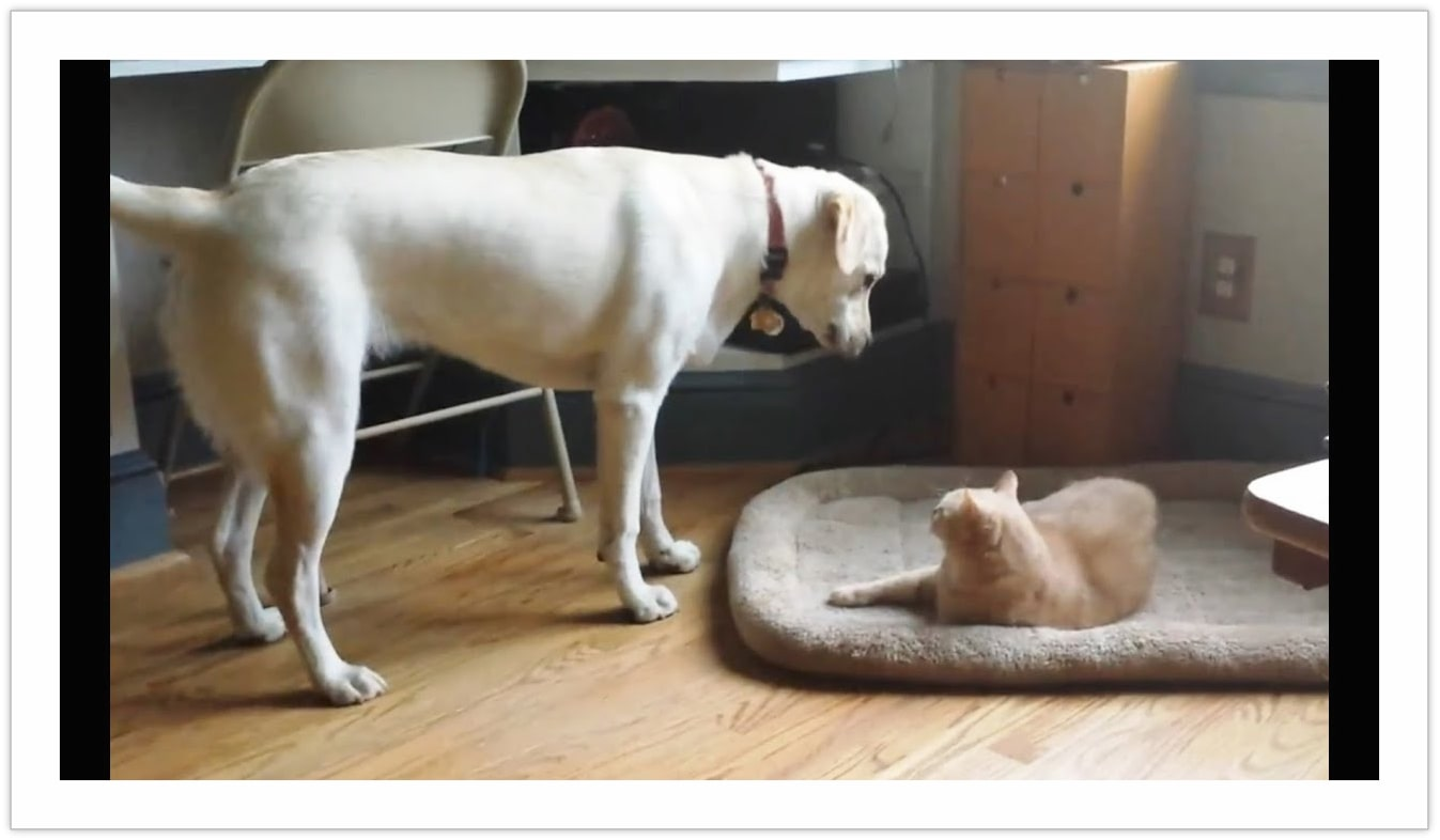 living together of dog and cat