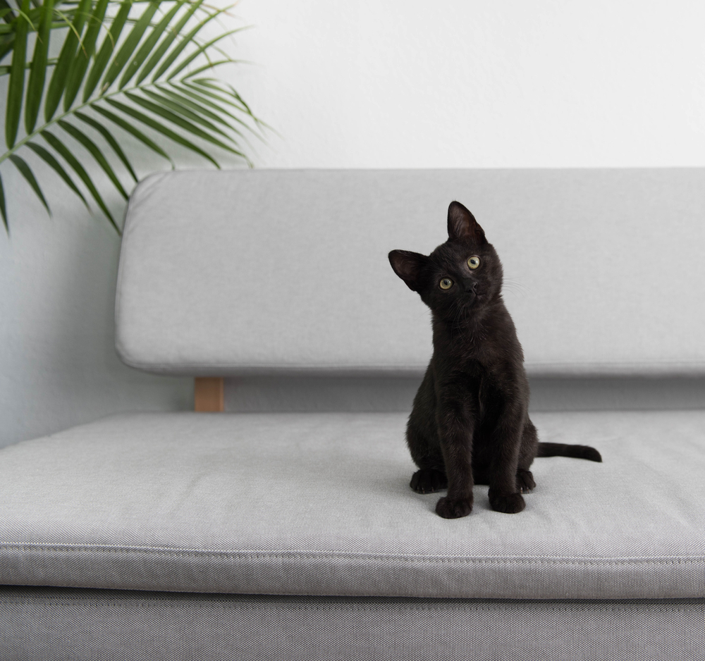 Cats Body Language Guide - straight upright ears