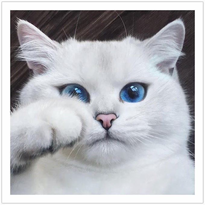 Can't stop staring back - Beautiful cat pictures
