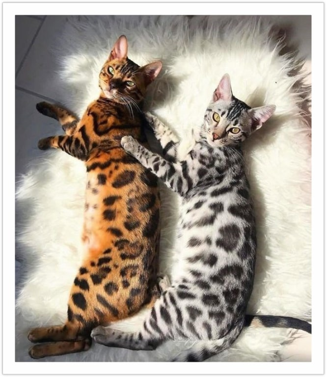 Cats of Different Colors - Beautiful cat pictures