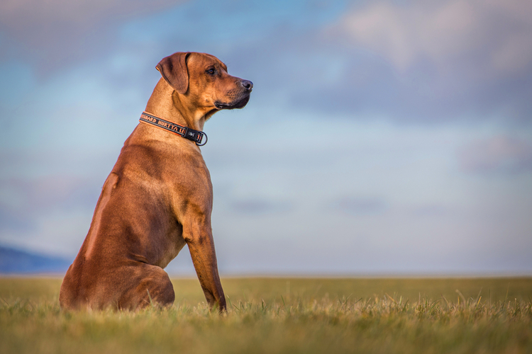 Large Means More is a Myth - Facts about dogs