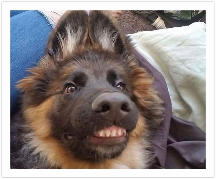 Smile Please - funny dog pictures