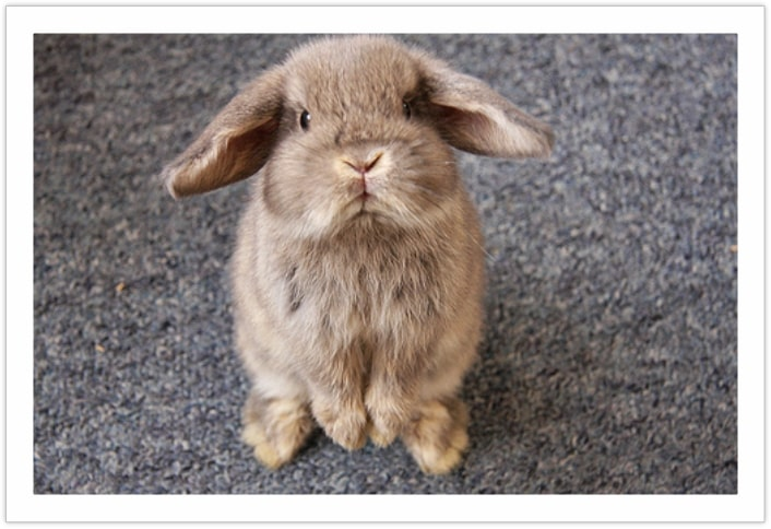 complaint against my human - funny rabbit pictures