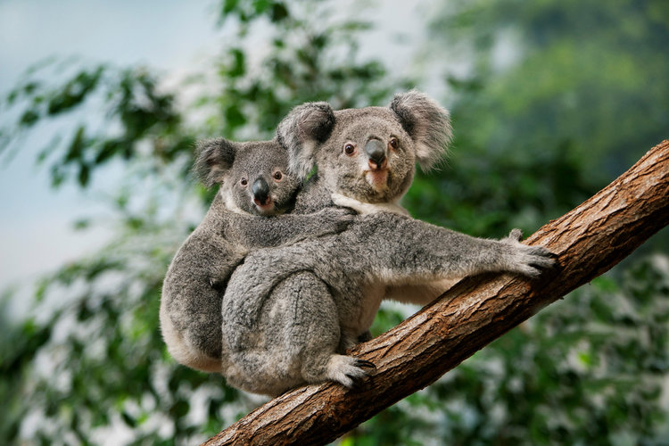 cuddly creatures of the wild