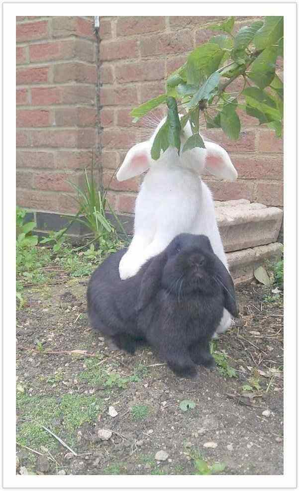 two is better than one - funny rabbit pictures