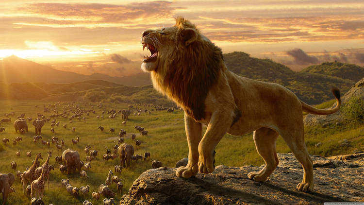 Very Sound - Facts About Lions